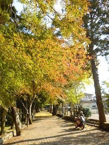 なばり四季のブログ-2.11.11.23