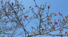 なばり四季のブログ-0409