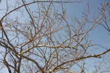 なばり四季のブログ-20130316(1)