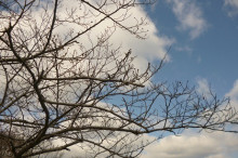 なばり四季のブログ-2013032101