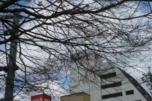 なばり四季のブログ-2013032103