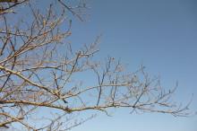 なばり四季のブログ-2013032201