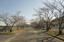 なばり四季のブログ-2013032202