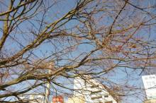 なばり四季のブログ-2013032203