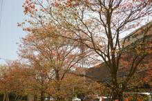 なばり四季のブログ-20130415