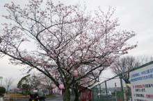 なばり四季のブログ-0411
