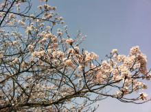 なばり四季のブログ-0413