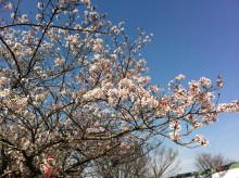 なばり四季のブログ-0417