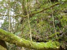 なばり四季のブログ-樹木