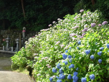 なばり四季のブログ-201306221