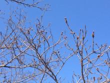 なばり四季のブログ-0327