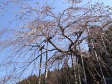 なばり四季のブログ-0402