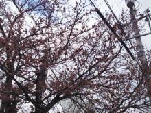 なばり四季のブログ-0404