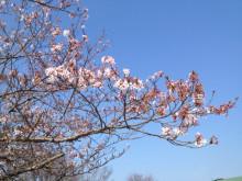 なばり四季のブログ-0419
