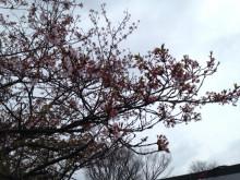なばり四季のブログ-0420