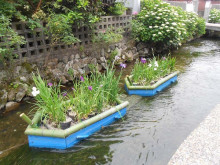 なばり四季のブログ-20130609