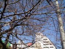 なばり四季のブログ-0329