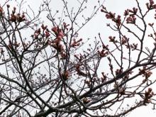 なばり四季のブログ-0406