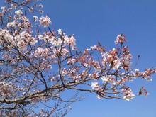 なばり四季のブログ-0418