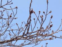 なばり四季のブログ-0328