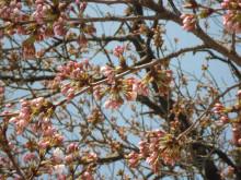 なばり四季のブログ-0405