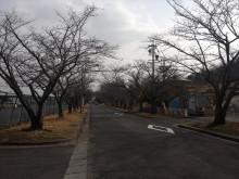 なばり四季のブログ-20130318
