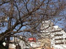 なばり四季のブログ-2013031903