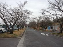 なばり四季のブログ-20130320