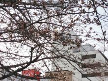 なばり四季のブログ-2013032403