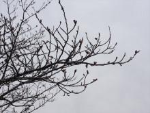 なばり四季のブログ