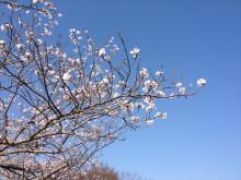 なばり四季のブログ-040501