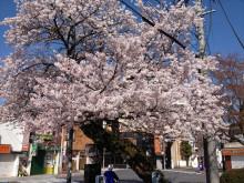 なばり四季のブログ-040504
