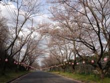 なばり四季のブログ-20130410