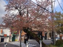 なばり四季のブログ-20130411