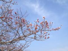 なばり四季のブログ-0410