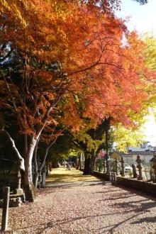 なばり四季のブログ-積田神社