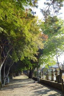 なばり四季のブログ-sekitajinjya