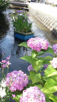 なばり四季のブログ-6月14日