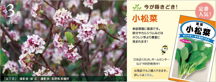 日本農産種苗株式会社